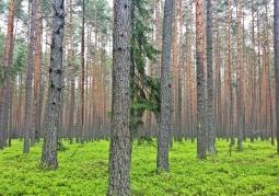 Solska Forest Landscape Park