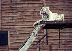 Zoo Safari - Borysew