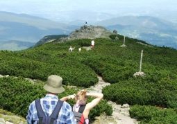 Mountain pine floor on Babia Góra