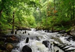 Rivers of the Drawieński National Park
