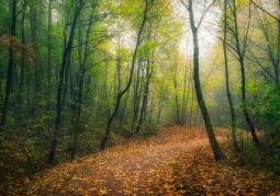 Bielańsko-Tyniecki Landscape Park