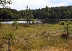 Wałachy Nature Reserve - Wdzydze Landscape Park