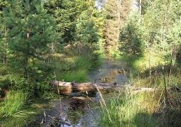 Kurze Grzędy Nature Reserve - Kashubian Landscape Park
