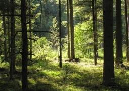 Janowskie Forests Landscape Park